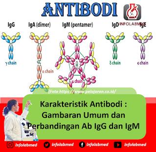 Karakteristik Antibodi Gambaran Umum dan Perbandingan Ab IgG dan IgM
