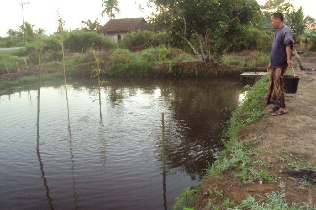 Gambar Kolam Ikan