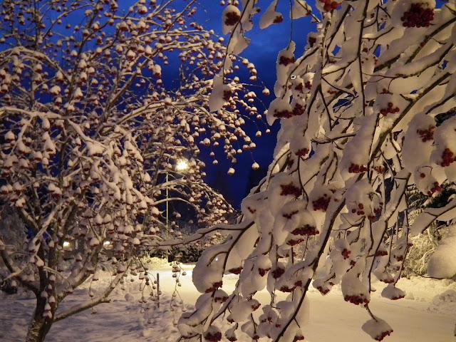 Lumi, pihlajat, valo, ilta, katuvalot