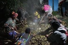 Kepala Suku Dambet, Melaksanakan Bakar Batu Sebagai Ungkapan Syukur Selamat Dari Serangan KKB