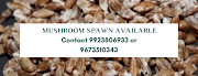 Buy Mushroom Spawn online from Biobritte Agro | Biobritte cart