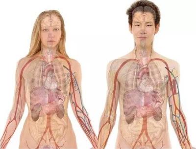 Perbedaan Utama Antara Anatomi dan Fisiologi-1