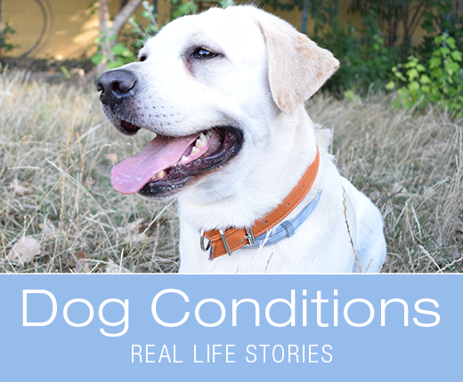 Dog Conditions - Real-life Stories: Bennett's TPLO Surgery