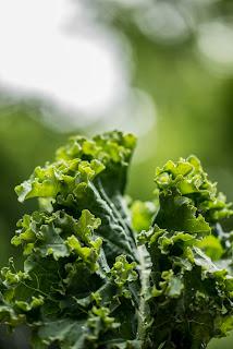 Kale salad recipe for pregnancy