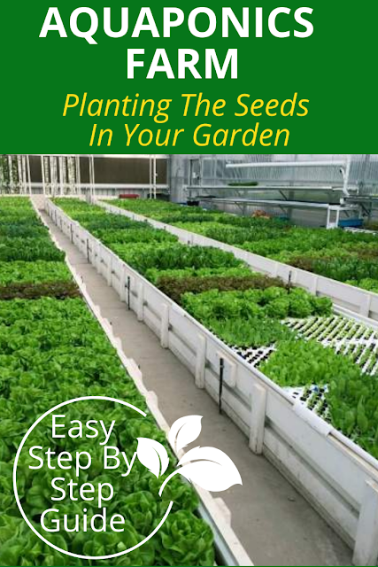 Planting The Seeds In Your Garden