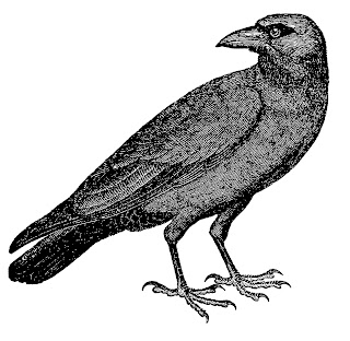 https://1.bp.blogspot.com/-VV5BFd4NYGQ/WdZst6C9JfI/AAAAAAAAhPk/EOwJYcC8YNwaLGS3r6jnX-5WTRxCurfygCLcBGAs/s320/crow-image-bird-drawing-artwork-illustration.jpg
