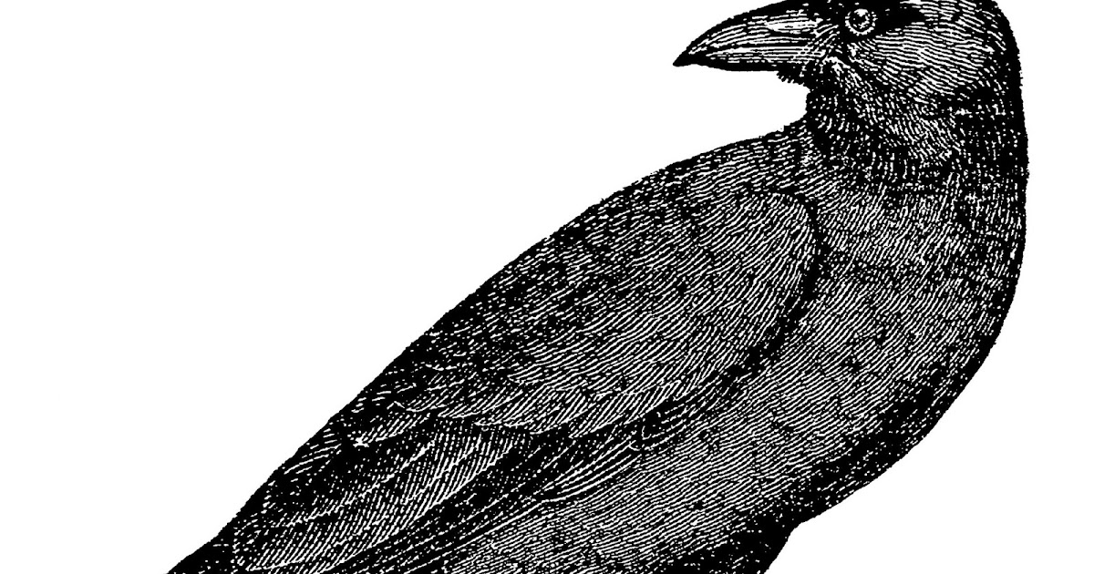 Digital Stamp Design Vintage Free Crow Raven Drawing Bird