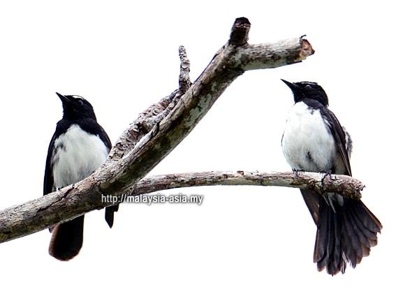Birding Raja Ampat