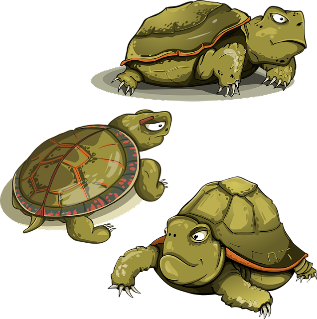 gambar kartun kura-kura png