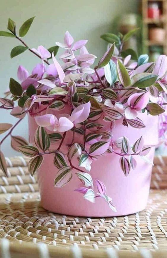 10 Μικρά Φυτά Εσωτερικού Χώρου