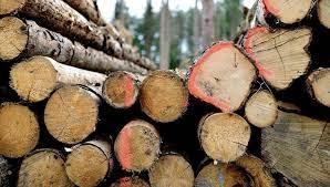 Proses Penguapan Air Kayu pengeringan kayu