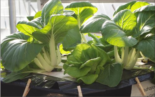 Desain Rak Sayuran - Desain Terbaru Rumah Modern Minimalis ...