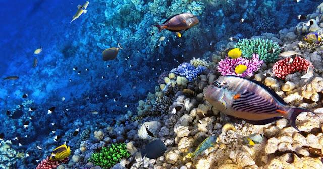 Best Aquariums in the USA: Waikiki Aquariums: