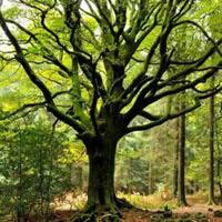 BigEscapeGames-Seeking Forest House