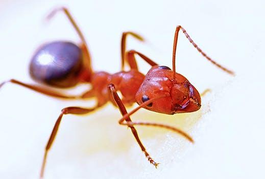 7 Binatang Sumber Penyakit Yang Ada di Lingkungan Rumah