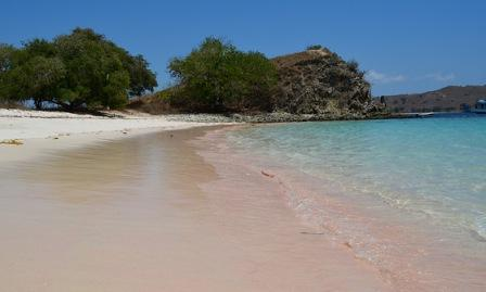 Pink Beach pink beach lombok pink beach flores pink beach komodo pink beach ntt pink beach indonesia pink beach labuan bajo pink beach malang pink beach lombok island pink beach flores ntt pink beach ntb pink beach nias pink beach dimana pink beach in komodo island pink beach di flores pink beach bali pink beach lombok indonesia pink beach flores island pink beach tour pink beach in the world pink beach bima pink beach adidas pink beach at lombok pink beach australia pink beach ada dimana pink beach at komodo island pink beach antigua pink beach agenda pink beach avis pink beach aruba pink beach auckland pink beach a lausanne pink beach and cottages bermuda pink beach africa pink beach at san vicente northern samar pink sands beach at harbour island pink anchor beach bag pink sand beach australia pink sand beach antigua pink shell beach and marina pink shell beach and resort pink beach bahamas pink beach bermuda pink beach blog pink beach banyuwangi pink beach bahama pink beach barbuda pink beach bomb hot wheels pink beach bonaire pink beach bag pink beach balls pink beach blanket pink beach barbados pink beach bermuda closed pink beach bridesmaid dresses pink beach bike pink beach bomb pink beach body mist pink beach barbuda resorts pink beach club pink beach club bermuda pink beach cruiser pink beach crete pink beach club patara pink beach club lausanne pink beach california md pink beach chair pink beach club tucker's town bermuda pink beach club bermuda sold pink beach cover up pink beach cruiser with basket pink beach cruiser bike with basket pink beach club renovation pink beach club sold pink beach california pink beach caribbean pink beach club bermuda news pink beach costa rica