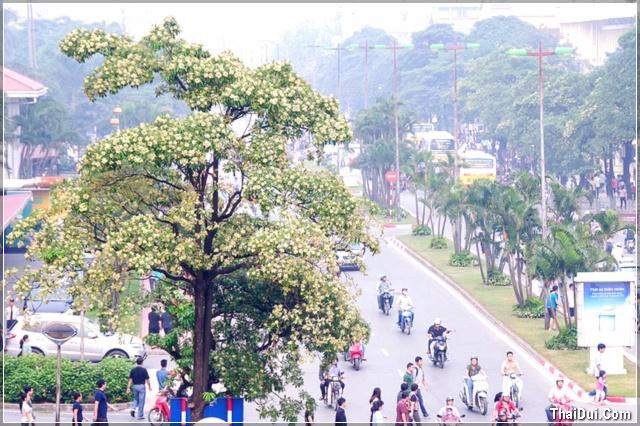 Phố Nguyễn Du nổi tiếng mùi hoa sữa