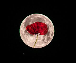 Día de los enamorados, Día de San Valentín, Amapola y luna, luna, José Luis López Recio, JLRquotes, joselop44, poesía,