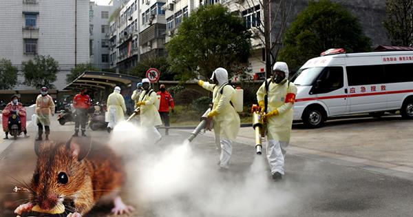 Gempar!! Selepas COVID-19, China Hadapi Hantavirus, Catat Rekod Kematian
