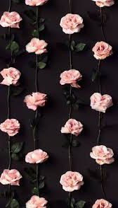 Wallpaper dinding gambar bunga mawar