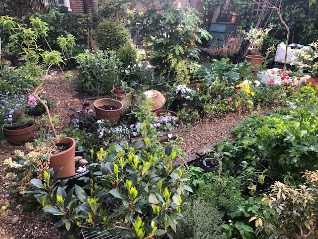 Garden filled with shrubs and perennials.