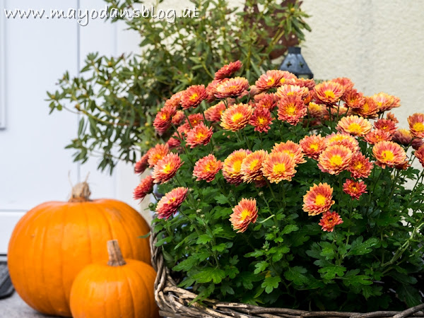 Bunter Herbst im Vorgarten - Farbenfrohe Pflanz- und Dekoideen