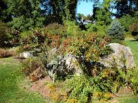 winterberry, ilex, shrub, boulder, fall garden