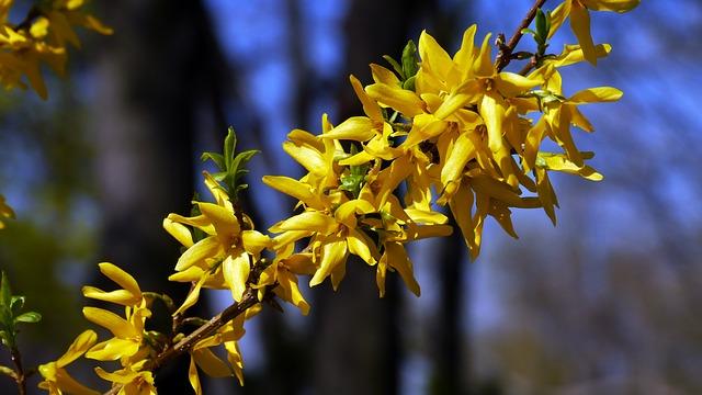 Tema sulla primavera