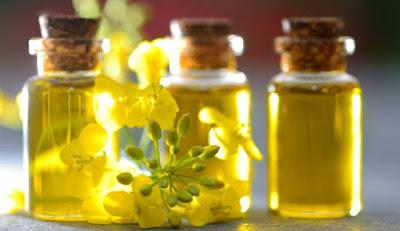 Manfaat minyak kanola