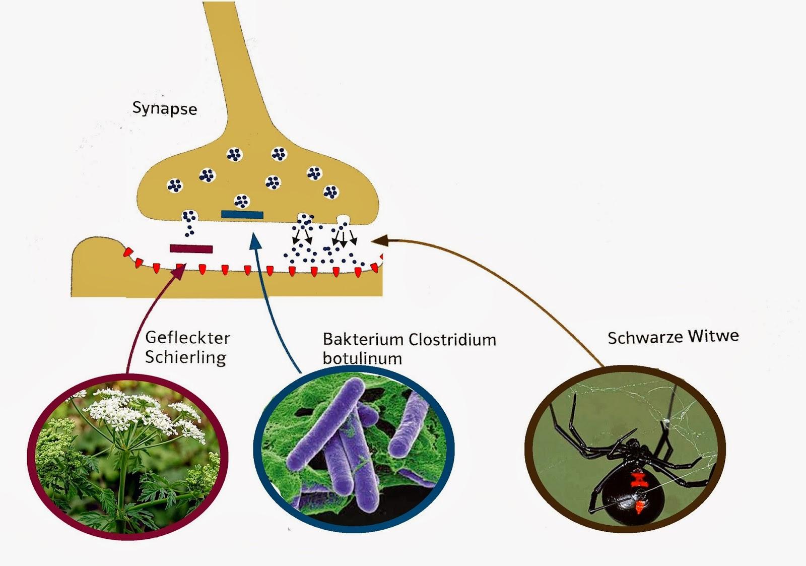 ökosystem see referat