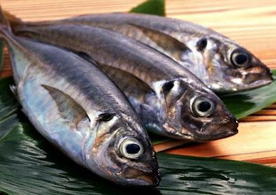 Manfaat dan Bahaya Ikan Tuna untuk Kesehatan