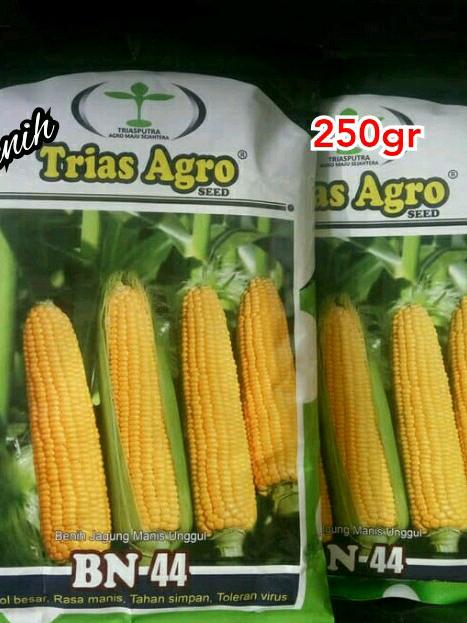 """Benih Jagung Manis Unggul """"BN-44"""" Trias Agro Seed"""
