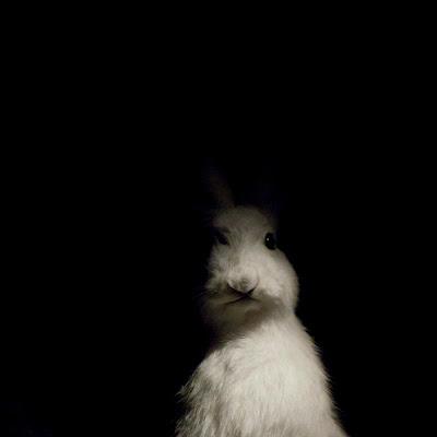 Kaninkolo Kokemuksia