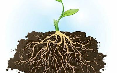 Fungsi, Struktur akar pada tumbuhan