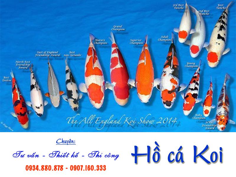 Tìm hiểu về cá koi và nguồn gốc của cá Koi?