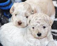 Happy Dogz Retreat Ontario