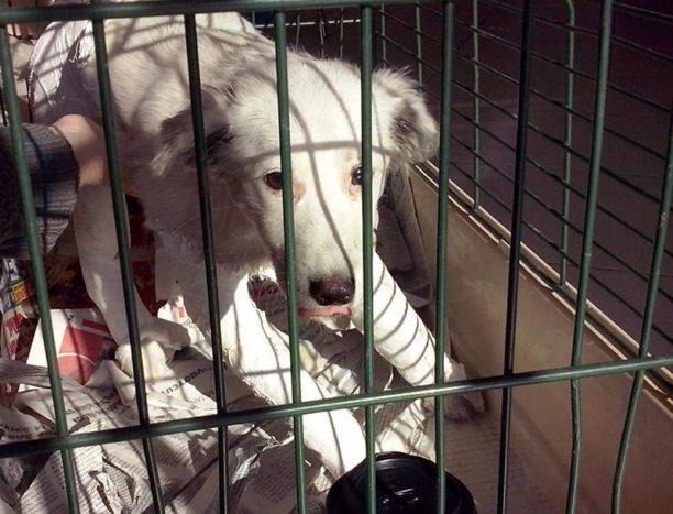 Ποινή «χάδι» για τον άνδρα που πέταξε τον σκύλο του από το μπαλκόνι στο Άργος