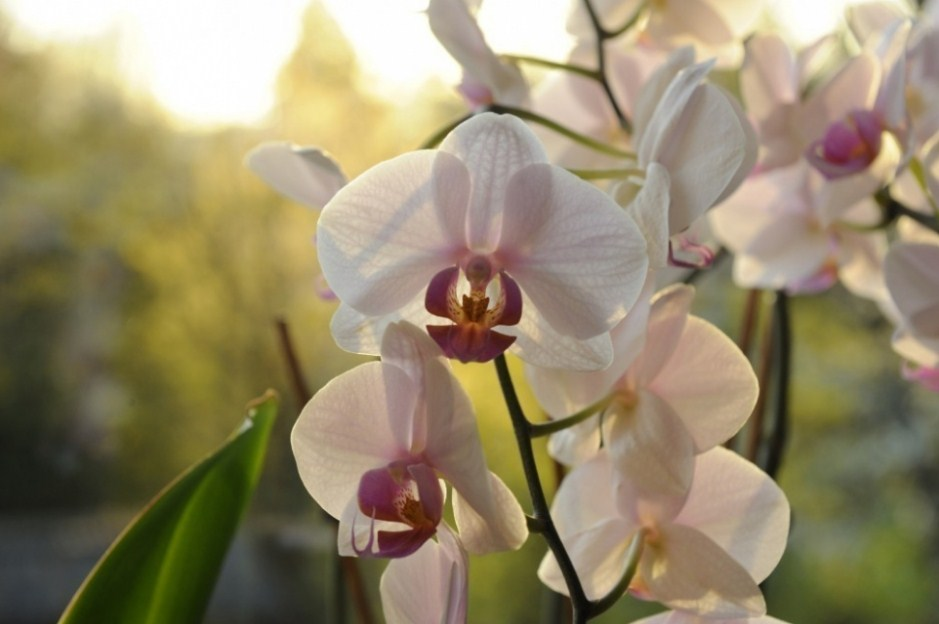 How to Start Growing Orchids