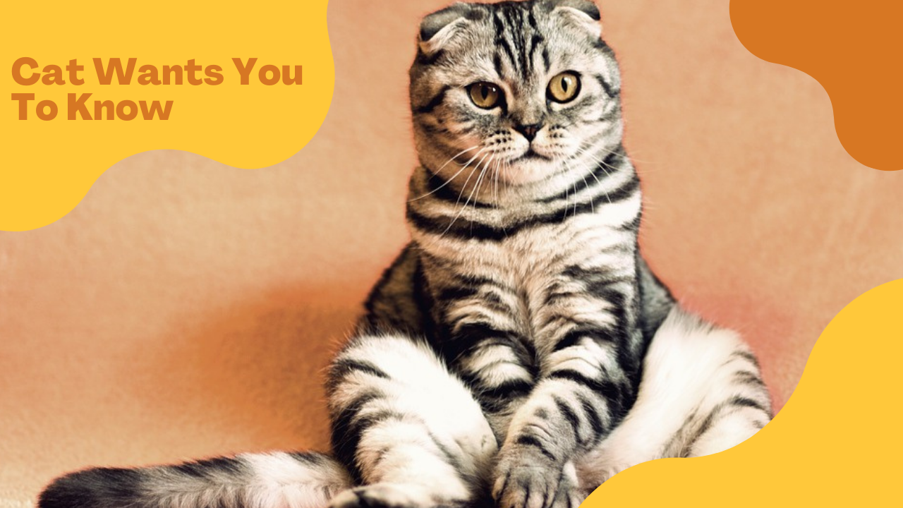 7 Things Your Cat Wants You To Know