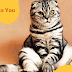 7 Things Your Cat Wants You To Know || Grooming Pets