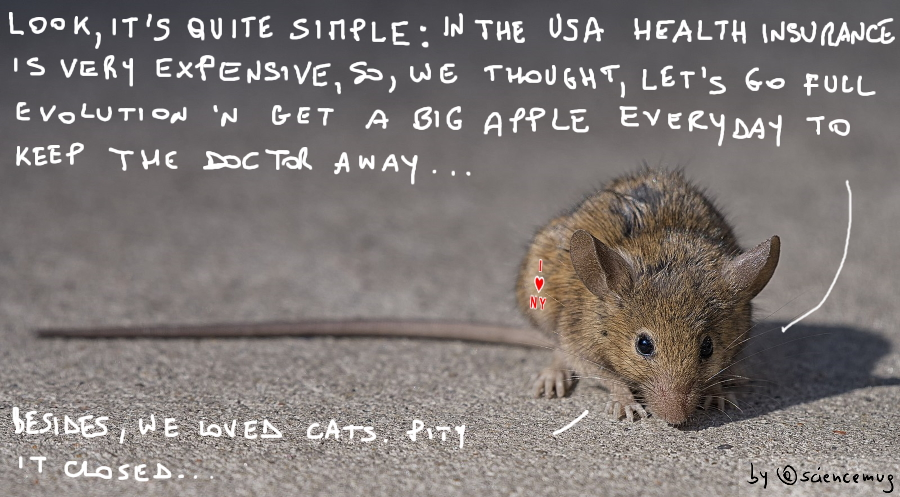 A New York brown rat explains why it genetically adapted to the Big Apple (by @sciencemug)