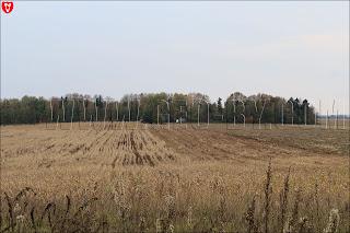 Жатва кукурузы у деревни Рышаши