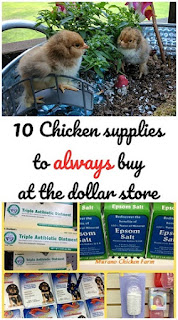 Chicken supplies from dollar store