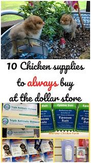 Chicken supplies from dollar store
