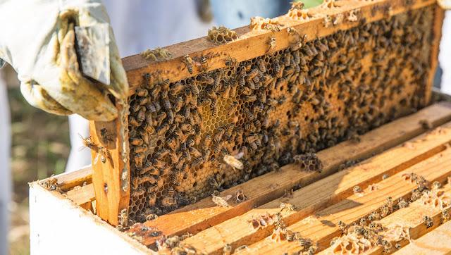 Ανακοινώθηκε ψηφιακό εθνικό μελισσοκομικό μητρώο