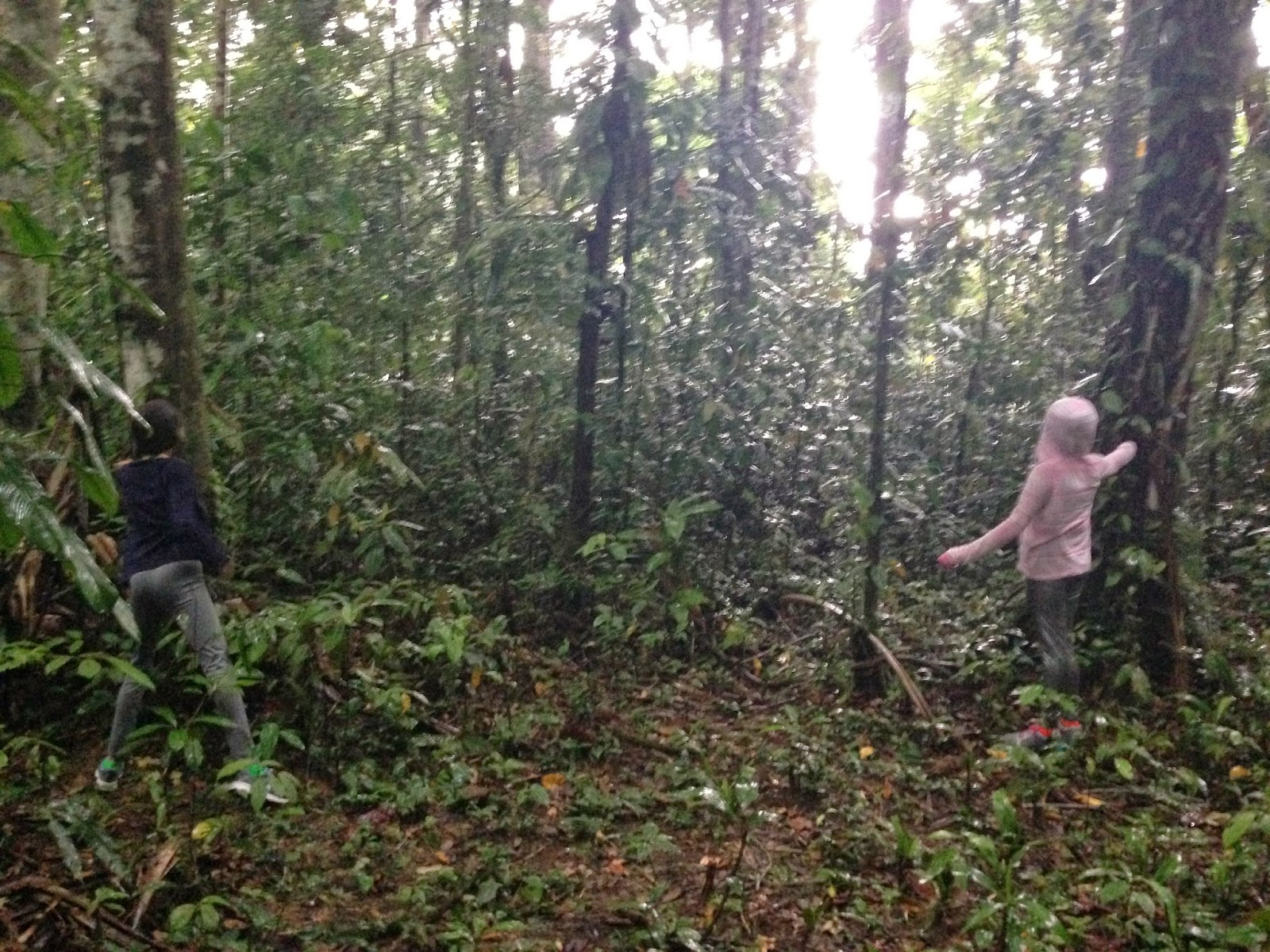 Jungle Survival Amp Bush Craft