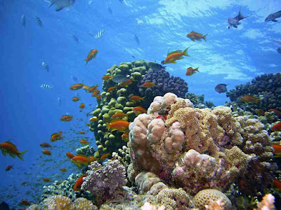 recife-de-coral