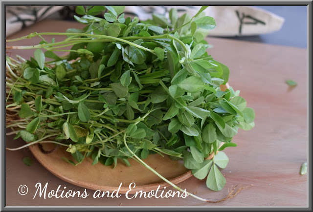 Fresh Methi Leaves Bundle