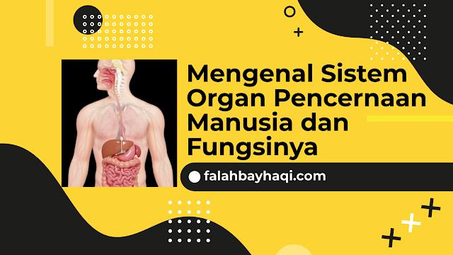 Sistem Organ Penceranaan Manusia