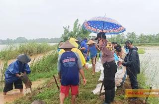 Sawah Terendam Banjir Akibat Jebolnya Tanggul DiDesa Paren Jepara
